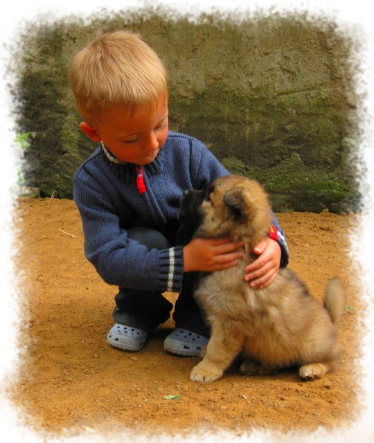 Milo und Nelly-Lou  -Eurasier-vom-Lands-End -